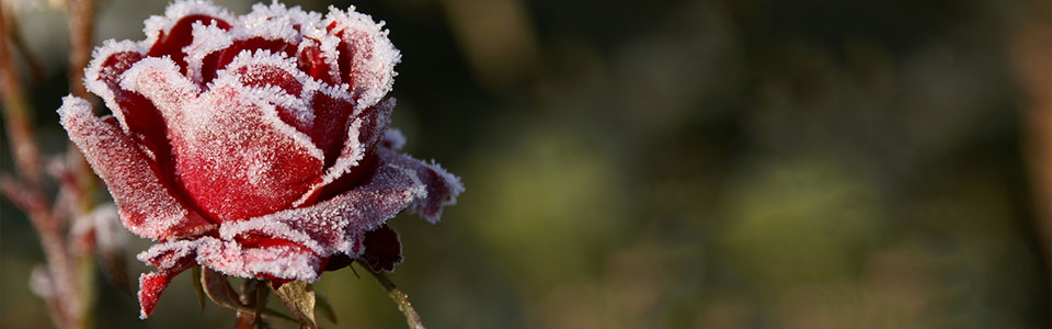 Cold Front on the Way – Ready Your Garden for the First Frost