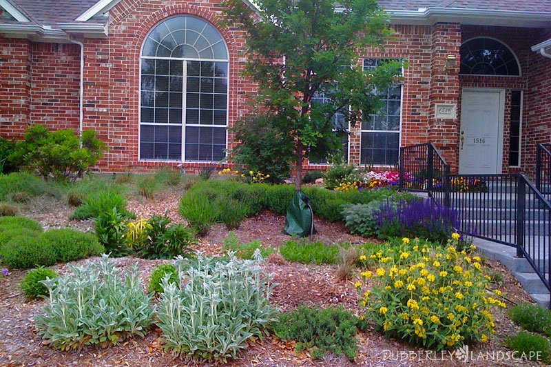 Captivating Plano, Texas Rain Garden After Installation Amazing Pictures