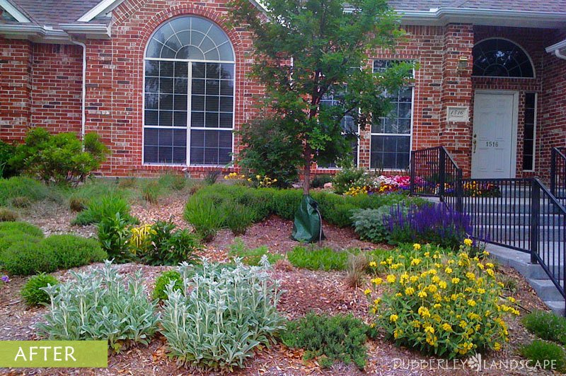 Low Maintenance Landscaping Ideas Curb Appeal Plants