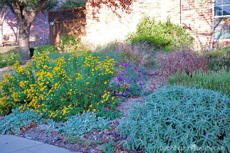 Rain garden plants for part shade garden ftempo - Young israel of kew garden hills ...