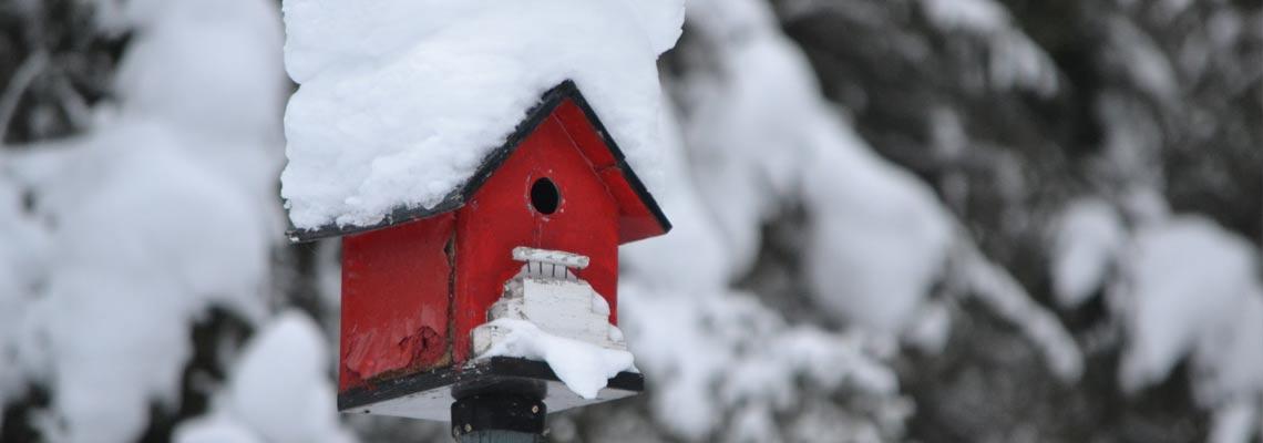 Winter Snow Bird House