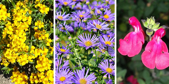 Fall Blooming Texas Native Perennials