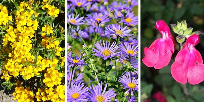 Fall Blooming Texas Native Perennials
