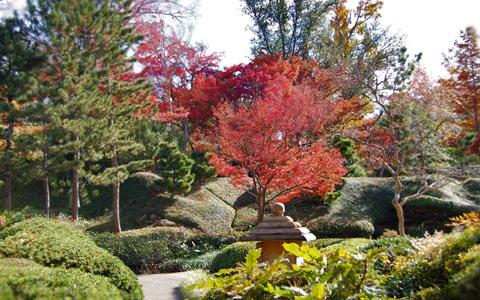 Ft. Worth Botanic Garden in the fall