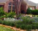 Shady rain garden