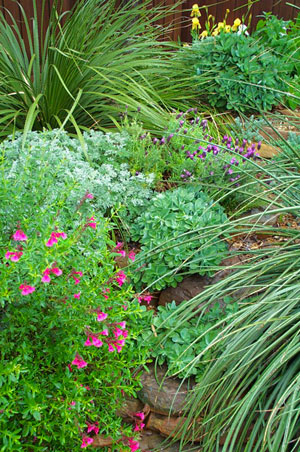 North Texas Native Landscaping Dubberley Landscape