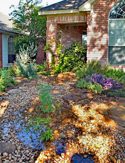 North Texas rain garden after a rain