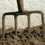 Planting Steps Crucial to Good Growing